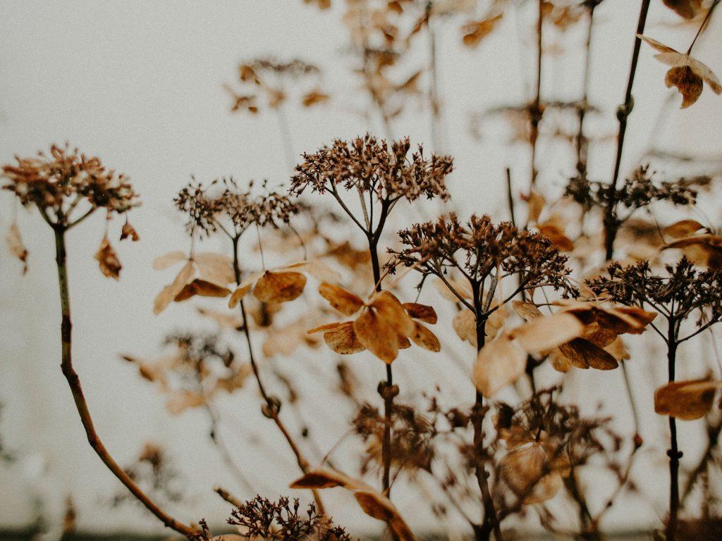 Цвет удачи: Какой цвет может принести процветание Деве