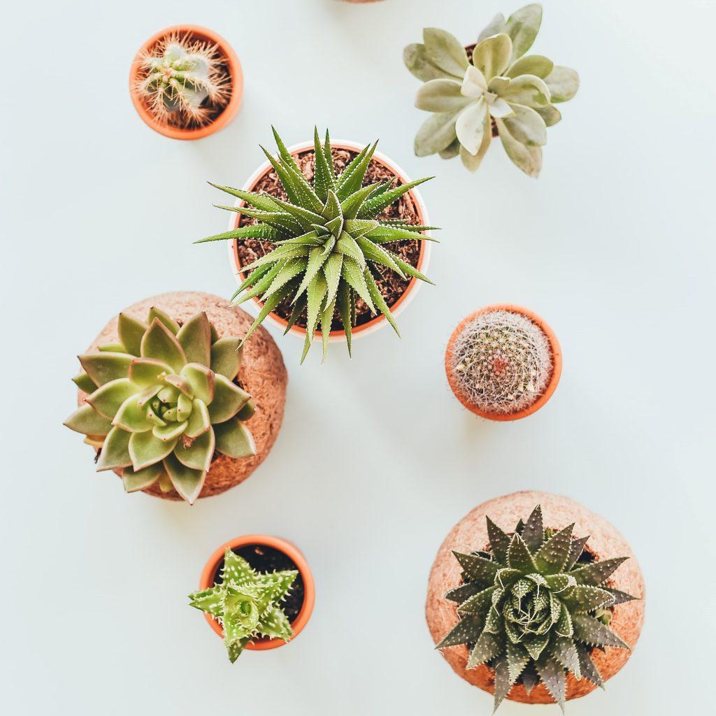 Полезный декор: комнатные растения